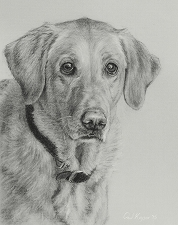 commission a dog portrait drawing